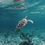Soliman Bay Sea Turtle