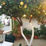 Petrino Garden Taverna, Malia, Crete.