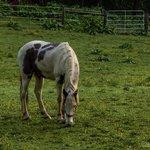 Adjacent horse pasture
