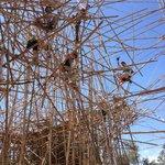 A current installation: the Big Bambú