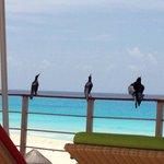 Tem corvo demais, na praia e área da piscina.