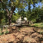 bell tent in the orange grove