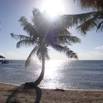 Palms and sun!