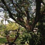 Relaxing in the Rasa garden