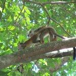 More Squirrel monkeys