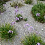 BEACHFRONT GRAVEL GARDEN
