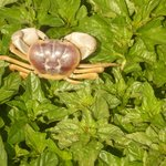 hundreds of crabs came out after a heavy rainstorm