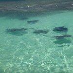 sea of stingrays