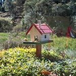 Casa de Passarinhos (com passarinhos!!!)