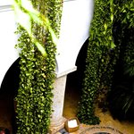 Plants draping rom the balconies into the courtyard /pool near reception