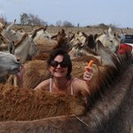 My sister got out of the truck to feed the herd of donkeys following us carrots!