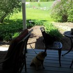 Porch view onto the agility park