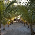One of many tranquil spots on Thatch Caye.