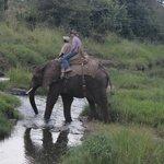 Elephant-back safari