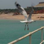 Bird life a plenty.