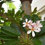 More flora :)