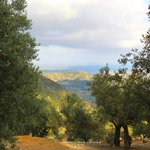 Blick vom Wanderweg hinab über Olivenhain