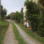 Drive way from the road to Volterra