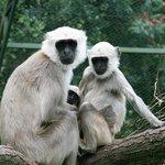 Serengeti-Park Hodenhagen     Am Safaripark 1, 29693 Ходенхаген, Нижняя Саксония...