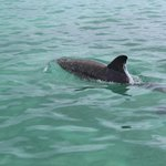 Our dolphin tour guide led the way and swam in our wake.