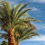Pool area palms.