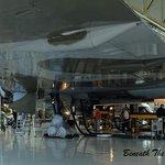 Beneath the Wing
