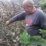 picking the capers for our salads
