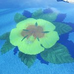 hibiscus pool bottom