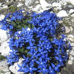 fiori in quota in  luglio