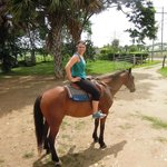 Horsey One