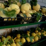 Sorrento Lemons a few small ones