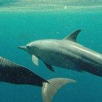 dolfijnen!!