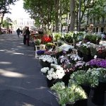 flower market in front of the hotel