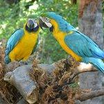 parrots