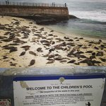 Seals at the Children's Pool- 5min walk from La V