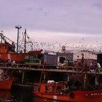 El Puerto con los pájaros volando