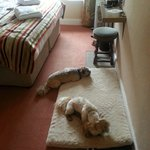 Absolutely loved our night away with my doggies. Hotel outstandingly clean and so welcoming