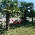 Hamac et Palmiers du jardin