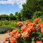 Red Butte Garden Foto
