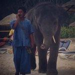 baby elephant visits