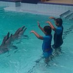 Kids swim with the dolphins