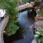 The Back Patio Pond