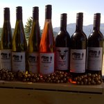 Our seven wines we produce
