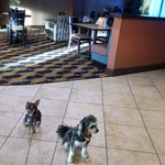 Rosie and Pepi's first hotel stay.