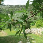 The lovely fruit trees
