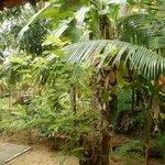 Jardines enfrente de la cabaña