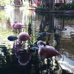 Flamingos in the lobby