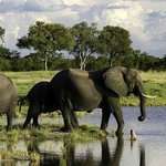 Going Kenya Safari -  Day Tours