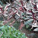 растения рядом