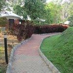 Pavement pathways to roam around